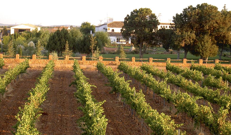 Vino-Guijoso-fuente-turismocastillalamancha.es_.jpg