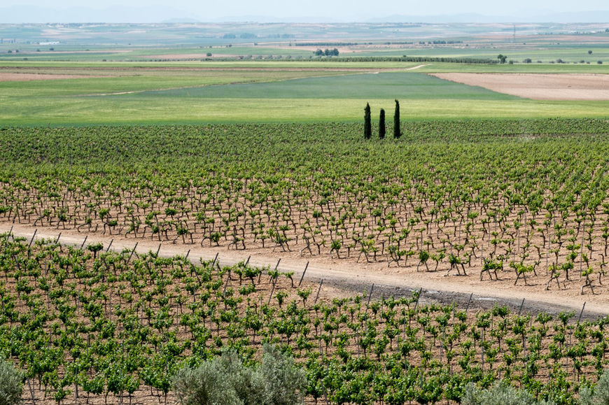 vino-campo-guardia-fuente-esquire.es_.jpg